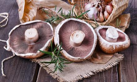 Marinade Grilled Portbello Mushroom