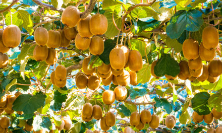 Moving from cows to kiwifruit